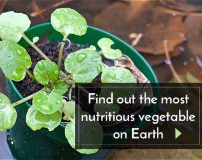41 most nutritional vegetables
