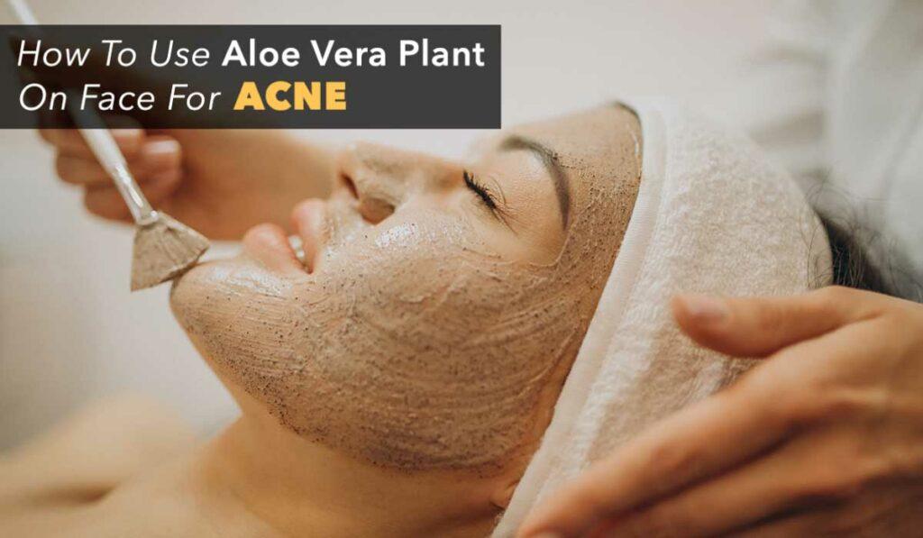 how to use aloe vera powder for face